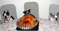 doggy-dinner.jpg