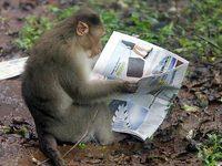 monkeypaper.jpg