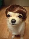 trumpdog.jpg