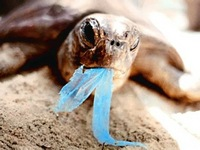 turtleplasticbag.jpg